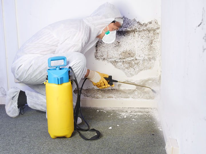 Professional doing Mold Removal in Raleigh