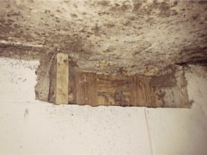 remove mold and odor from plaster in Roanoke, VA