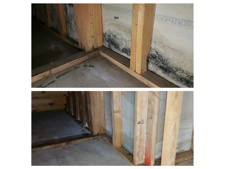 basement mold removal in danbury