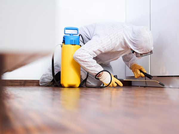 Professional doing Mold Remediation in Chattanooga