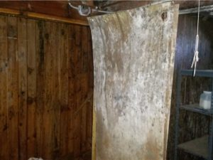 mold damage in new london