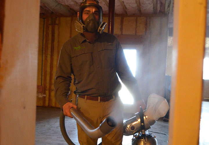 Professional using Our Mold Removal in Greensburg
