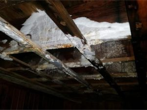 home ceiling mold damage in new london