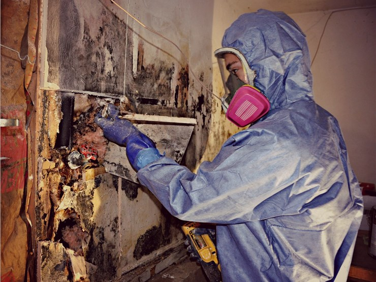 our staff doing mold inspection as a part of our mold removal services in Baltimore