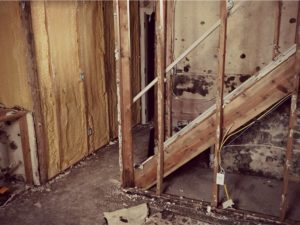 basement mold removal in charleston