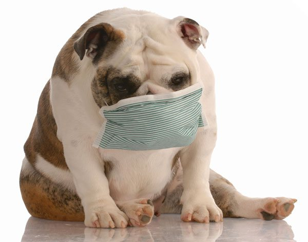 Green home solutions help improve indoor air quality in Madison so that your pets do not suffer