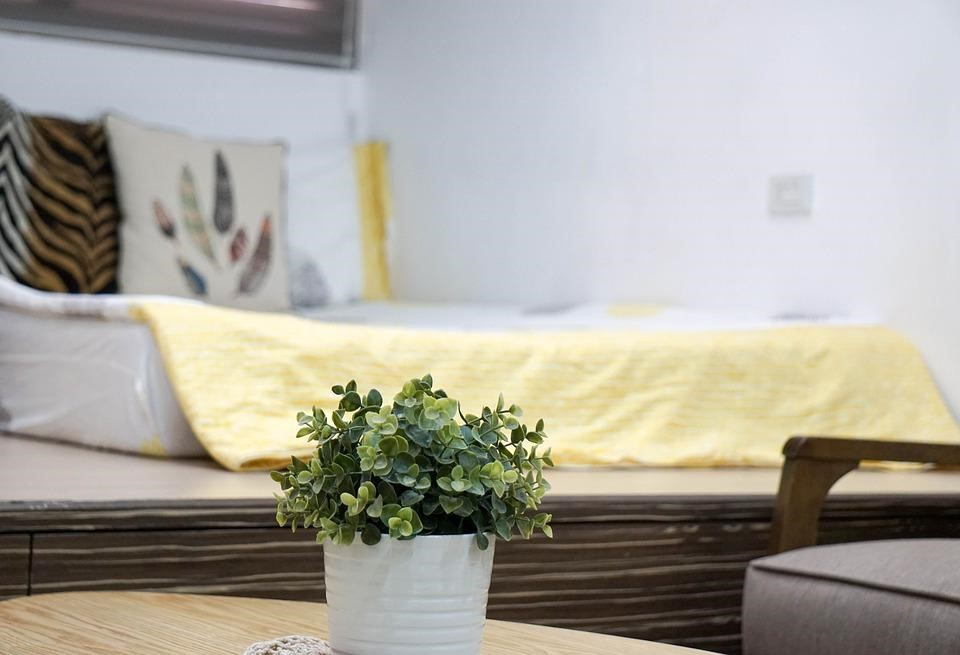 mold free room with plant on table