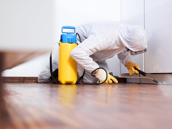 provider of mold remediation in duluth treating mold