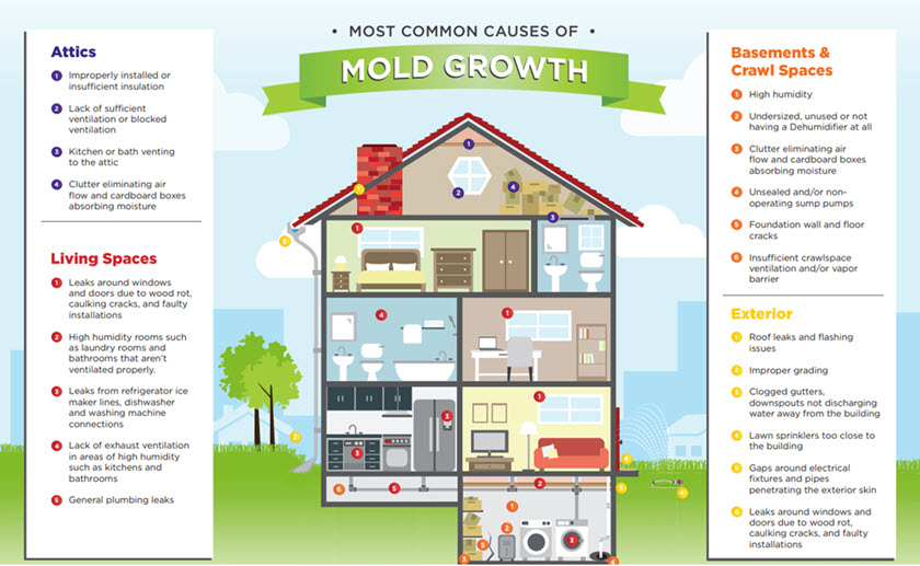 Most common causes of mold growth.